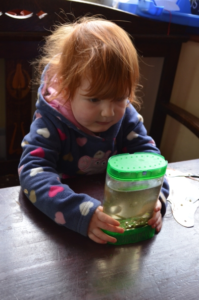 B2 was fascinated by the tadpoles
