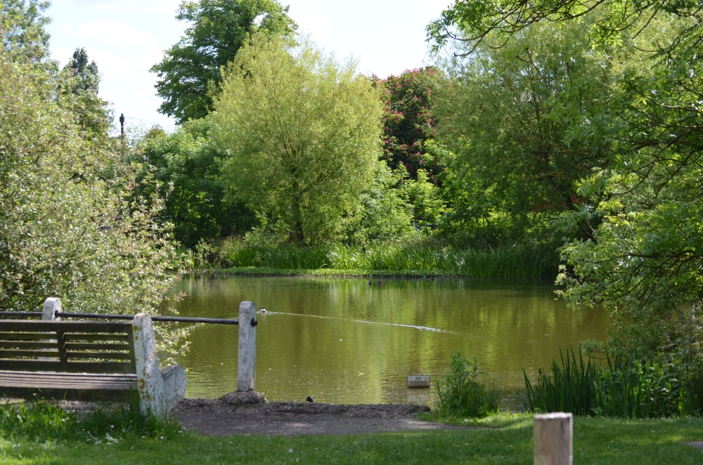 Our beautiful pond