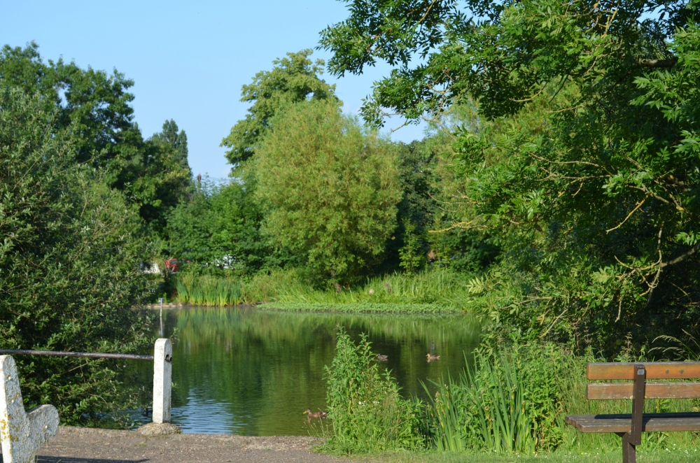 Our pond on a glorious summer's day