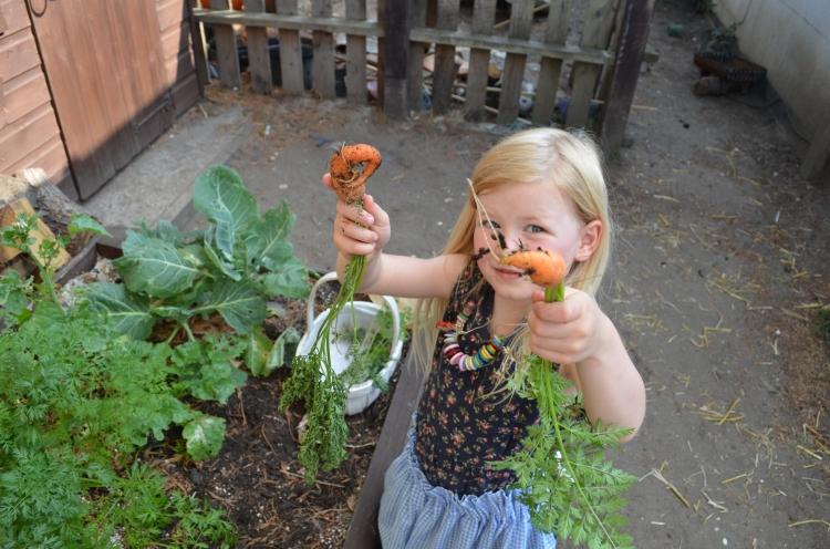 Our prairie carrots were slightly deformed prairie carrots!