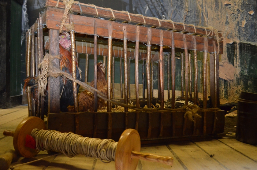 The chickens kept in a cage for eggs and meat