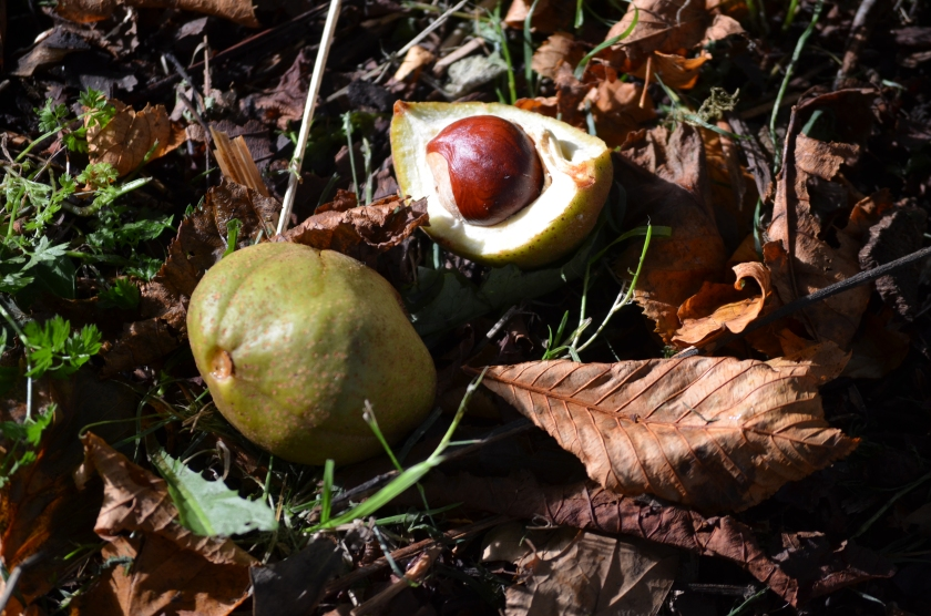 Conkers which inevitably leads to...