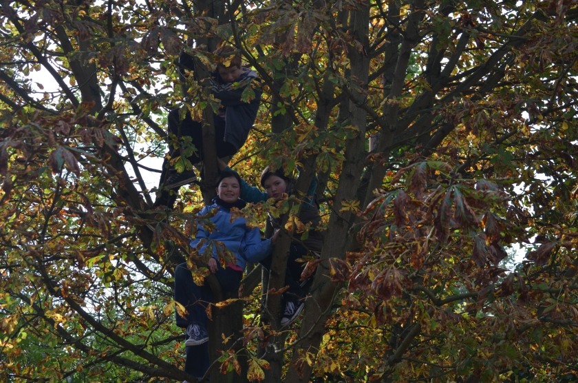 Climbing trees, which are looking distinctly Autumnal in nature