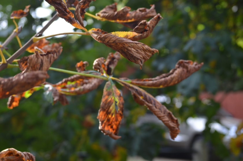 Leaves dying off....