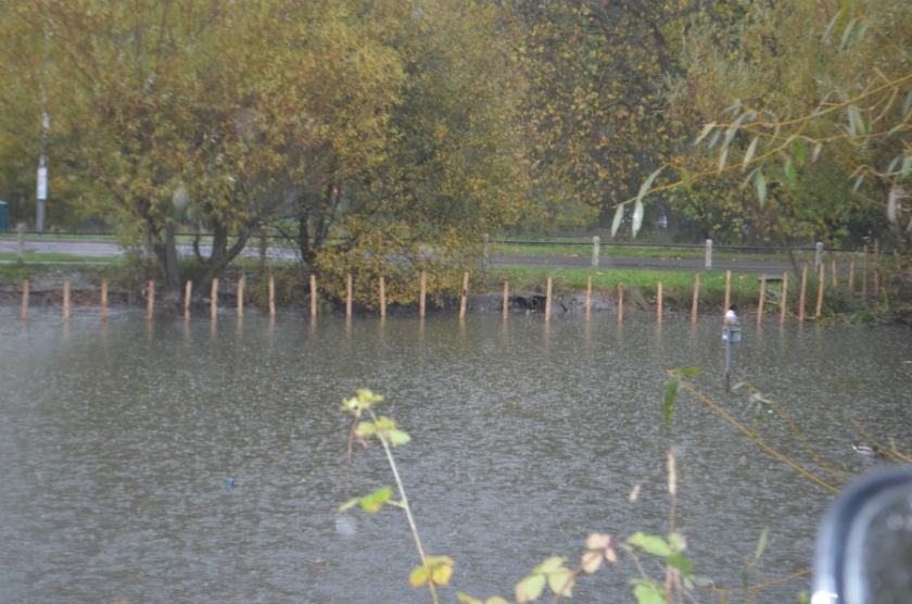 A large area of the side of the pond has been blocked off using wooden stakes