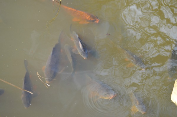 Some monster fish, in the very well stocked lakes