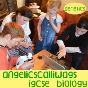 IGCSE BIOLOGY GENETICS