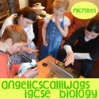 IGCSE BIOLOGY MICROBES