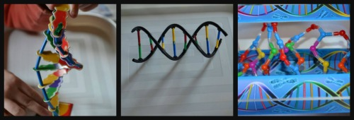 The three different DNA models together