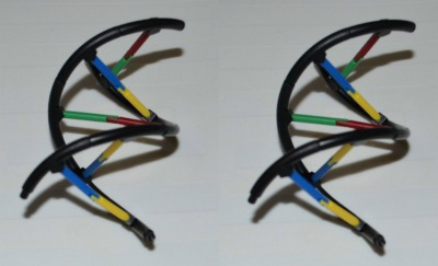 Ribbet collagedna replication2