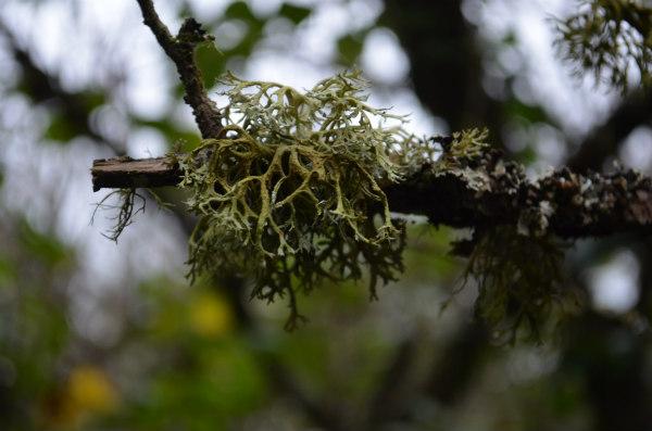 woodland-nature-study-lychin