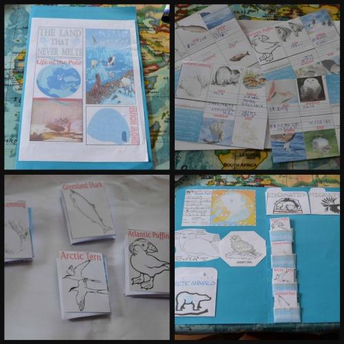 Ribbet collagearctic lapbook