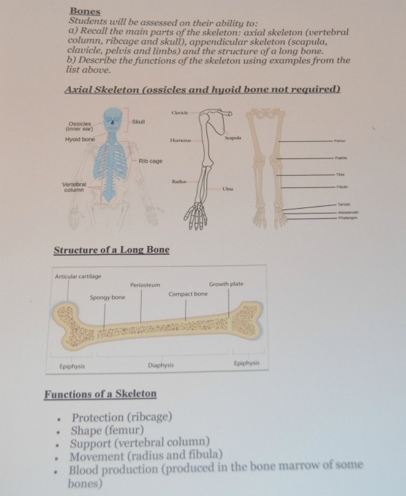 anatomy, physiology, bones 11