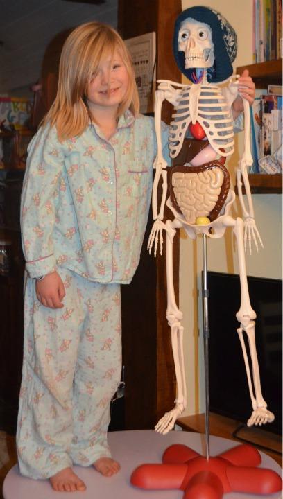 anatomy, physiology, bones 2