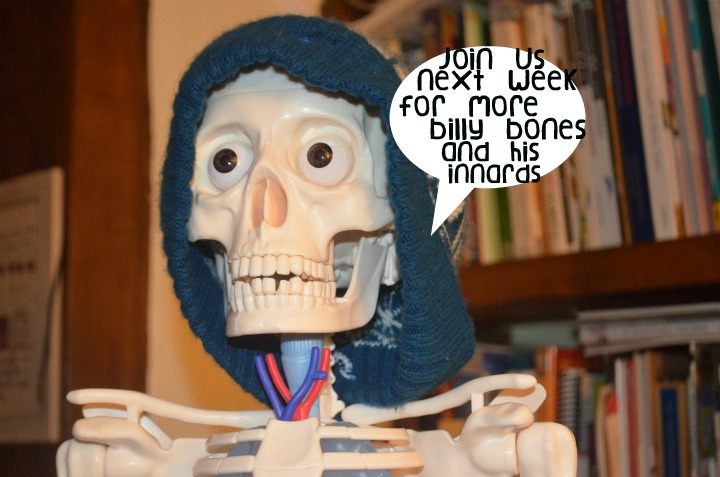 anatomy, physiology, bones 3
