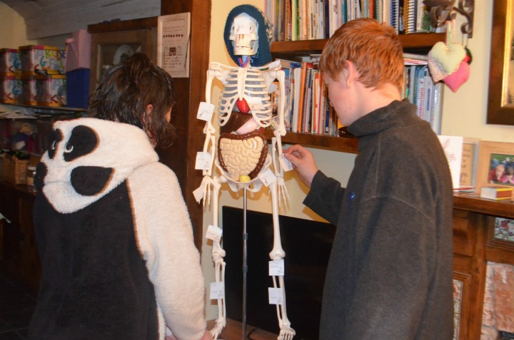 anatomy, physiology, bones 4