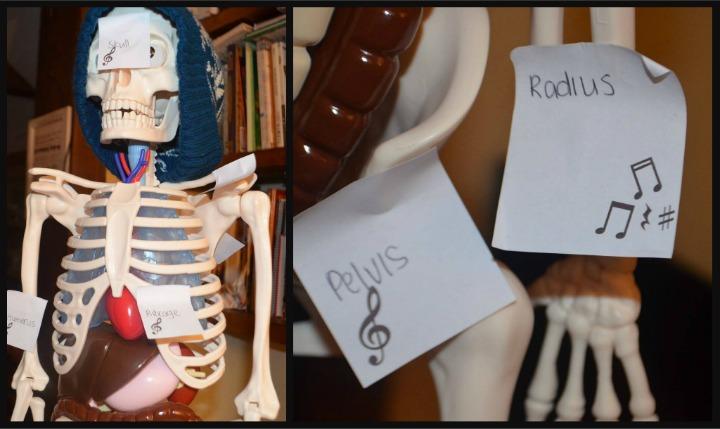 anatomy, physiology, bones 5