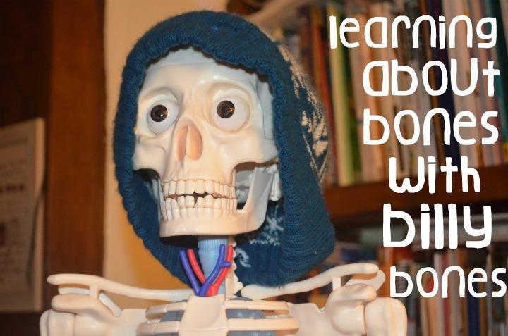 anatomy, physiology, bones