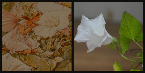 Ribbet collageff5