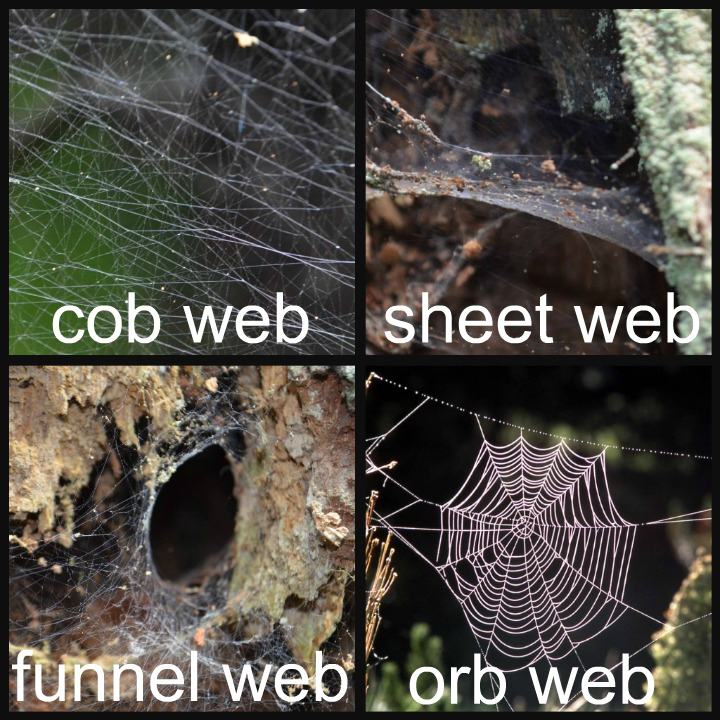 dead wood, nature study, spider web