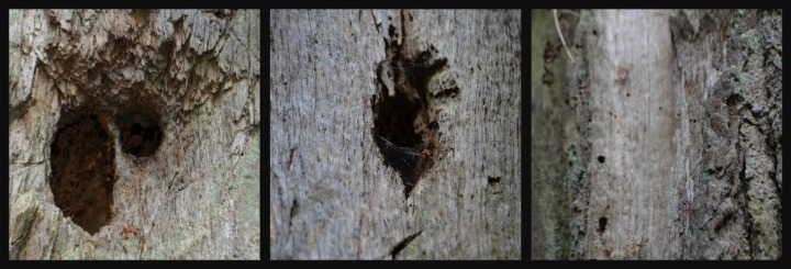 dead wood, nature study, woodpeckers