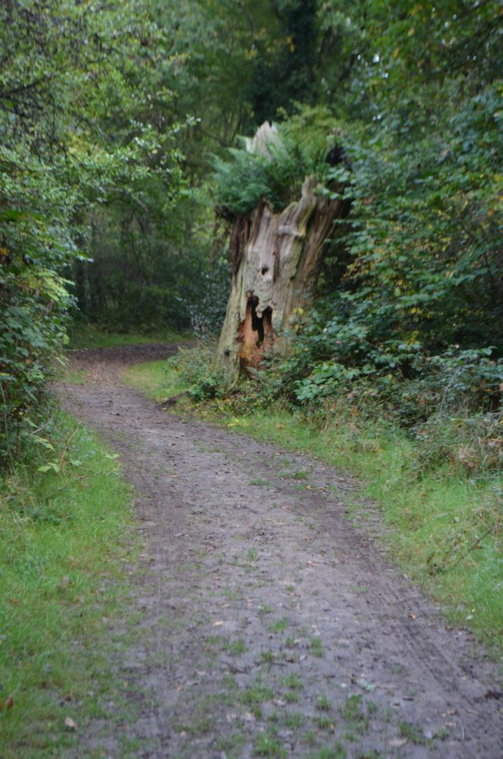 dead wood tree, nature study