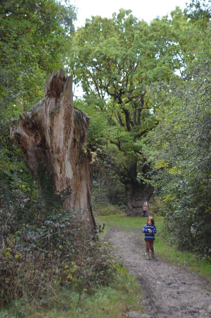dead wood tree, nature study1