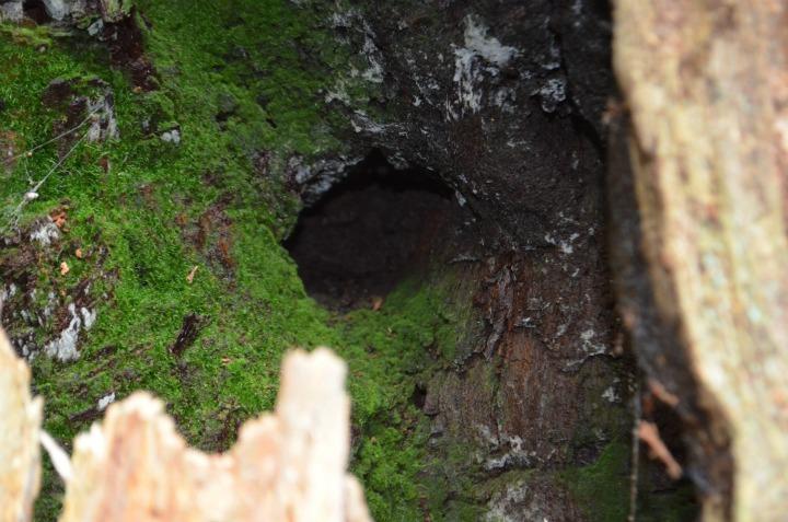 dead wood tree, nature study4
