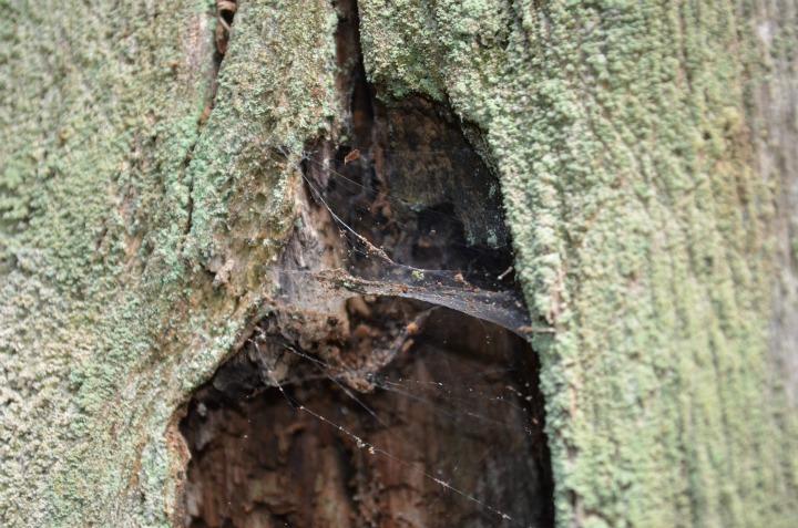 dead wood tree, nature study6
