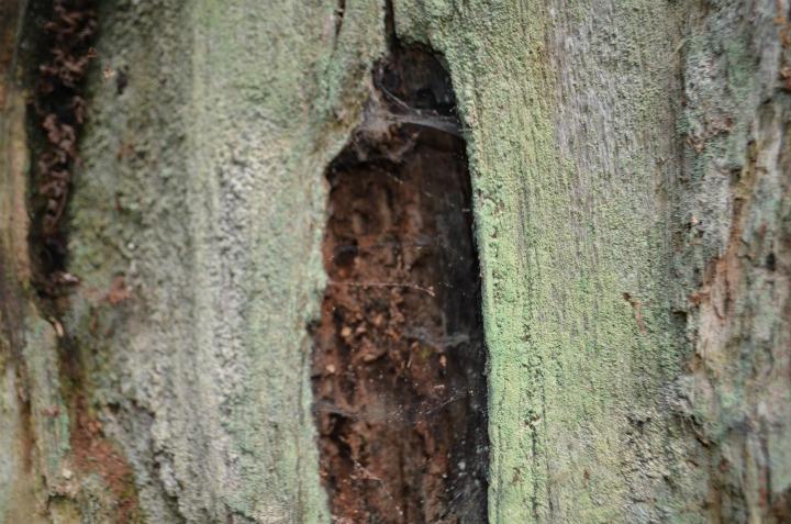 dead wood tree, nature study7