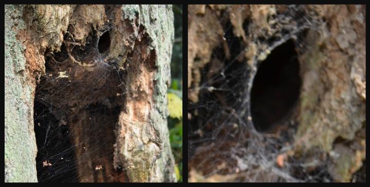 dead wood tree, nature study8