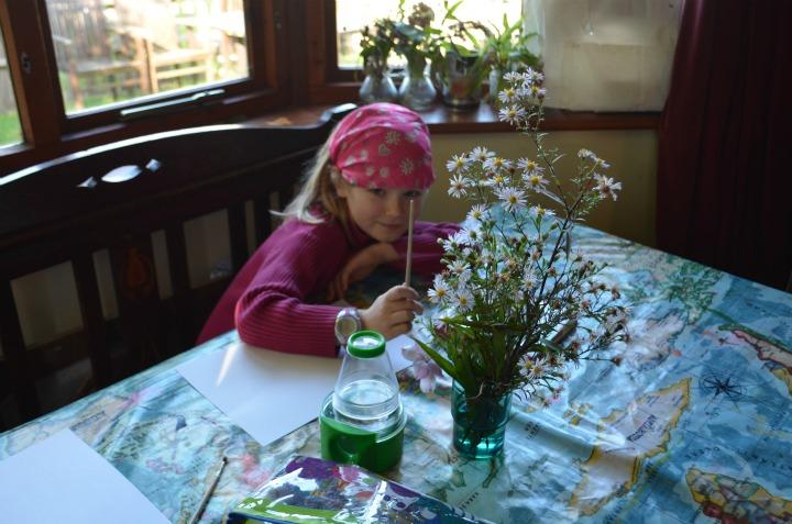 nature study, michaelmas daisy, flower fairy1