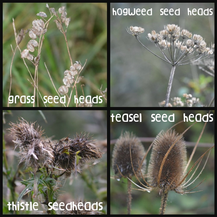 nature, study, seed heads