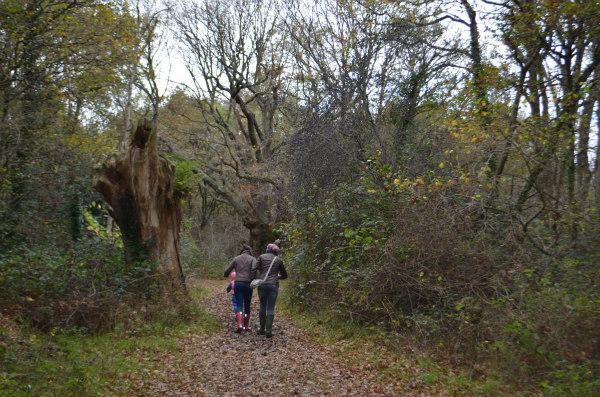 woodland-nature-study-oak-tree