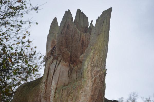 woodland-nature-study-dead-tree