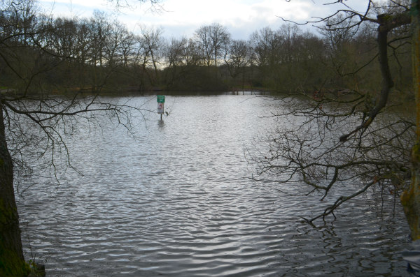 nature study-pond-2