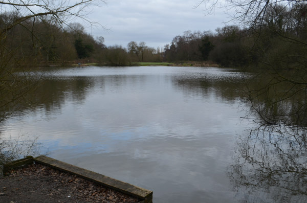 nature study-pond-5