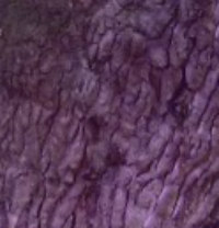 veteran tree- crevice