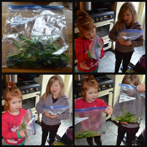 homeschool-dinosaurs-experiments-2
