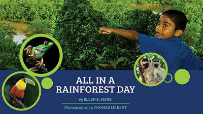 rainforest-day