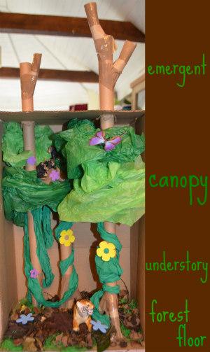South America-jungle-rainforest-diorama-18