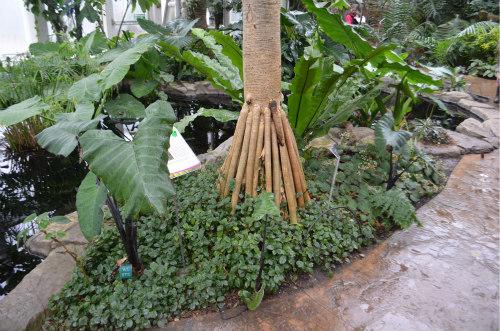 South America-jungle-rainforest-diorama-5