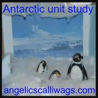 antarctic-button