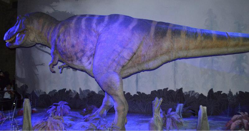 tyranosaurus-rex-4