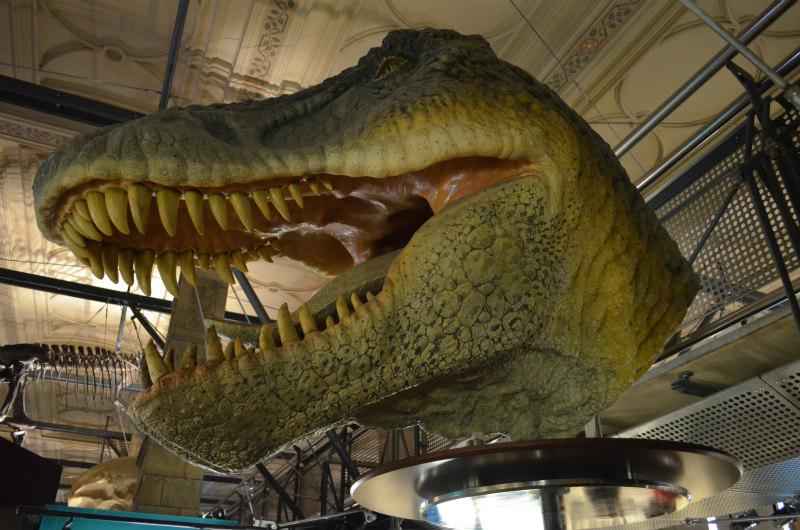 tyranosaurus-rex-8