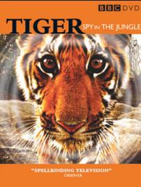 tigers-video