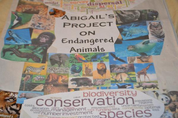 endangered-animals-tigers-1