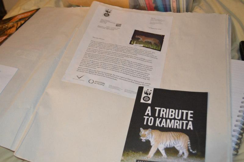 endangered-animals-tigers-11