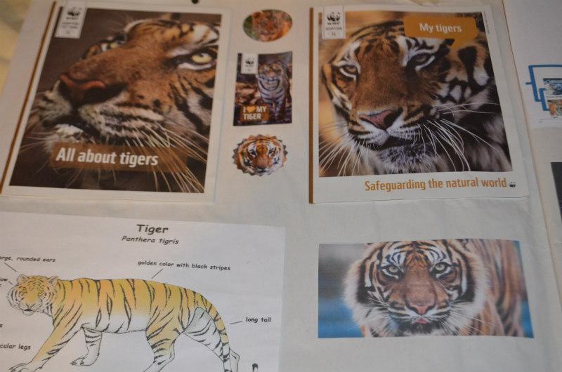 endangered-animals-tigers-2