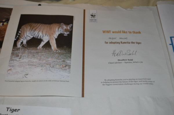 endangered-animals-tigers-4